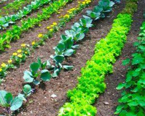 как спланировать огород