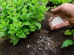 как удобрять огород