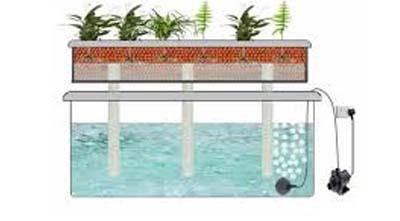 гидропоника балконных растений