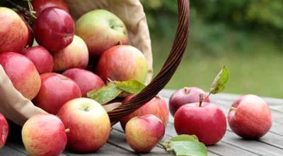кальций в яблонях и лежкость яблок