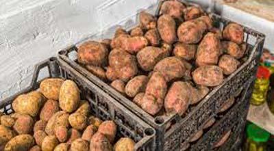 как правильно хранить овощи схема хранилища