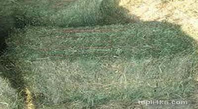 зеленые корма для животных
