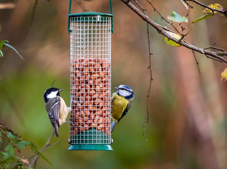птицы в нашем саду какая польза