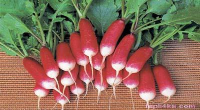 правильно выращиваем редис
