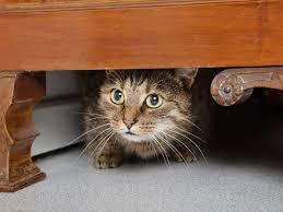 стресс у кошки как помочь