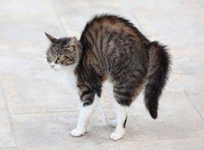 стресс у кошки лечение стресса у кошки